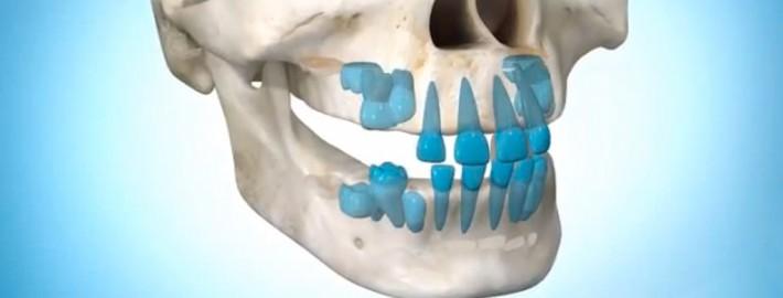 Normal Diş Erüpsiyonu